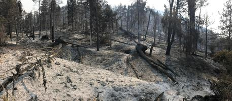 Il bosco dopo l'incendio che ha distrutto ettari di vegetazione sul Monte Morrone, Sulmona 30 agosto 2017 ANSA/ CLAUDIO LATTANZIO